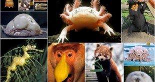 BioPills Animali e zoologia