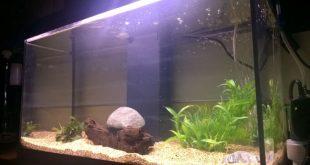 Acquario crea il tuo ecosistema biopills for Filtro x acquario