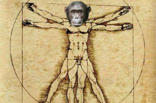 uomo è un animale
