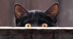 curiosità negli animali