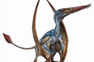 Lo pterosauro Allkaruen koi