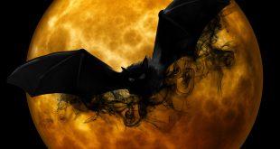 Bat bot