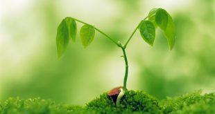 neurobiologia vegetale