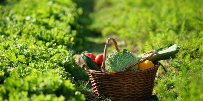 salute, benessere, sonno e alimentazione
