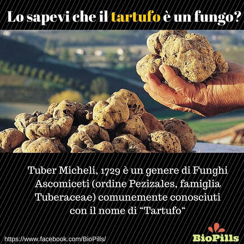 tartufo è un fungo