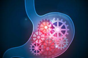 digestione dei carboidrati