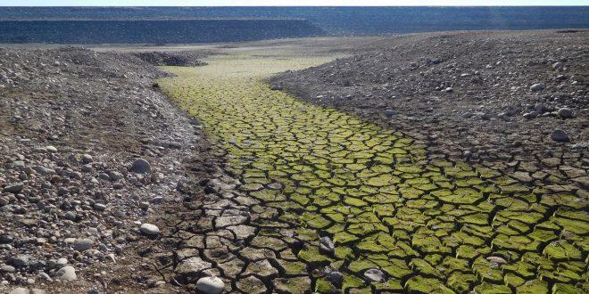 Cambiamento climatico: la Groenlandia e l'agricoltura in Africa