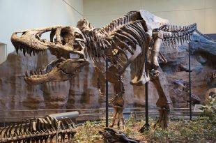 Tyrannosaurus rex:
