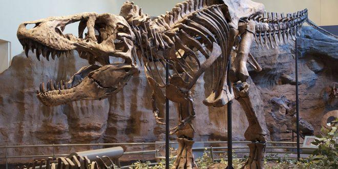 Tyrannosaurus rex: il re dei dinosauri