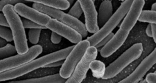 obesità e microbiota