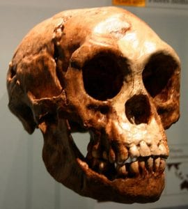 isola di flores homo floresiensis