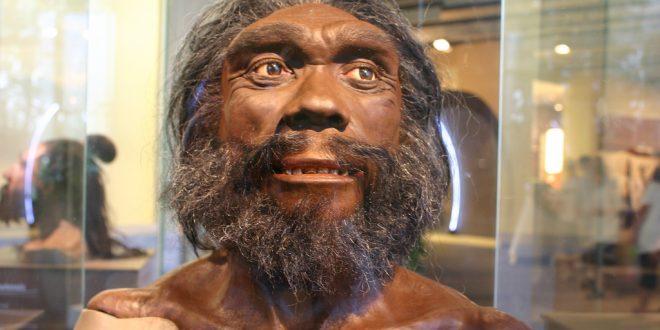 """Uomo di Ceprano, il """"nonno"""" dell'uomo moderno e dei Neanderthal"""
