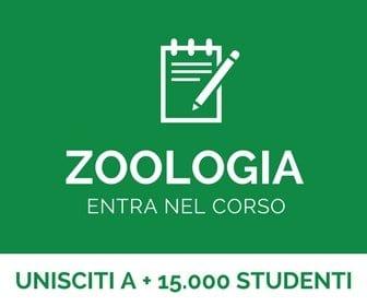 corso di zoologia