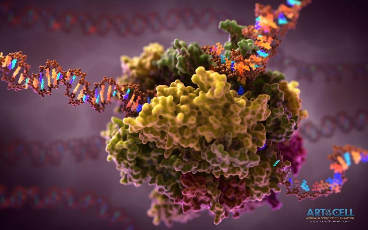 la trascrizione  le rna polimerasi