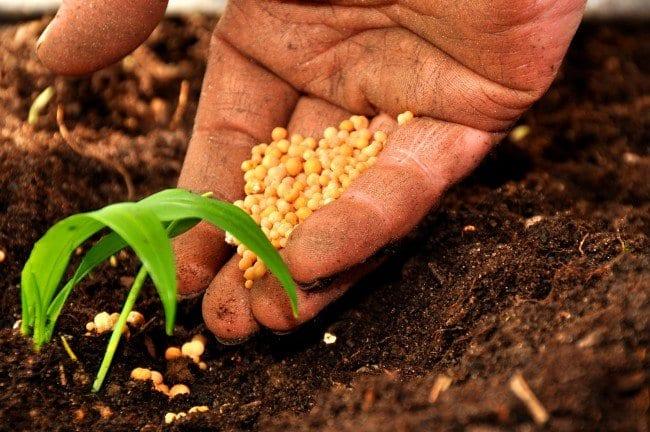 Perché l'agricoltura italiana richiede a gran voce le biotecnologie vegetali