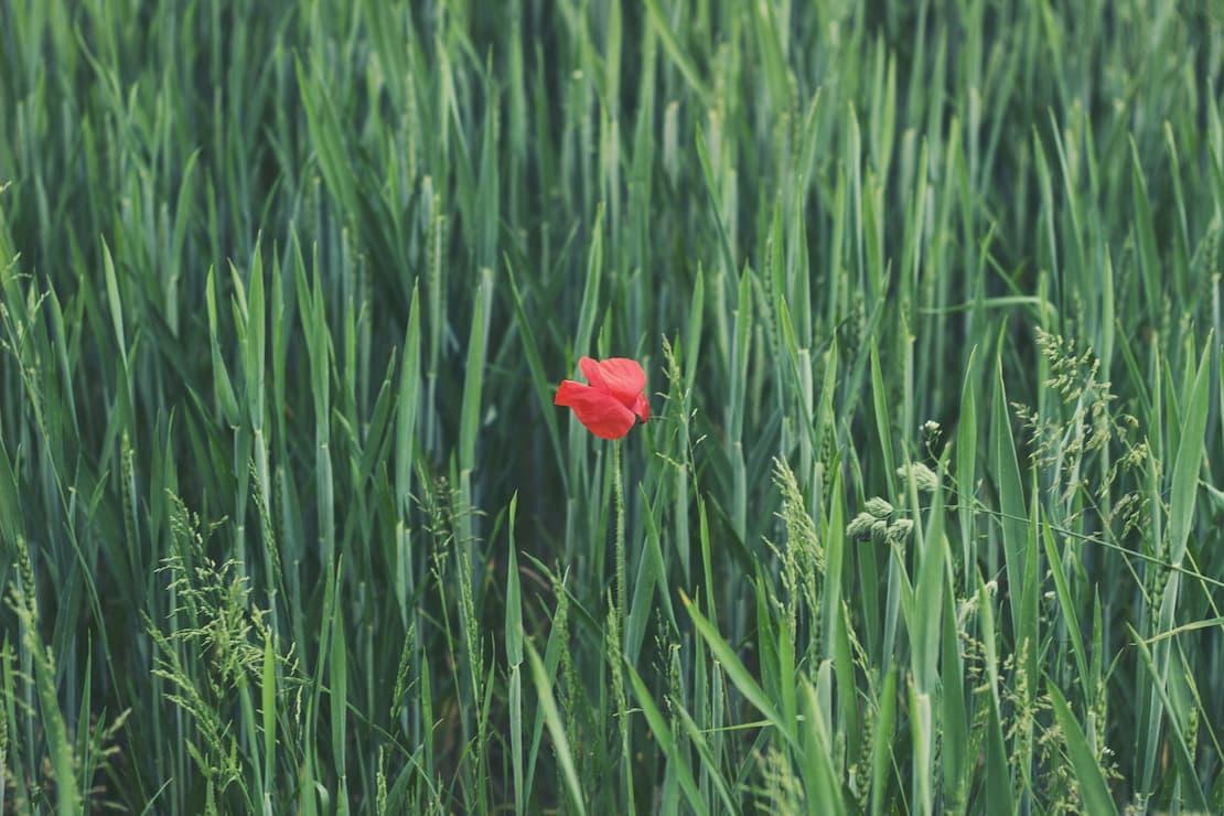 L'agricoltura italiana richiede le biotecnologie vegetali