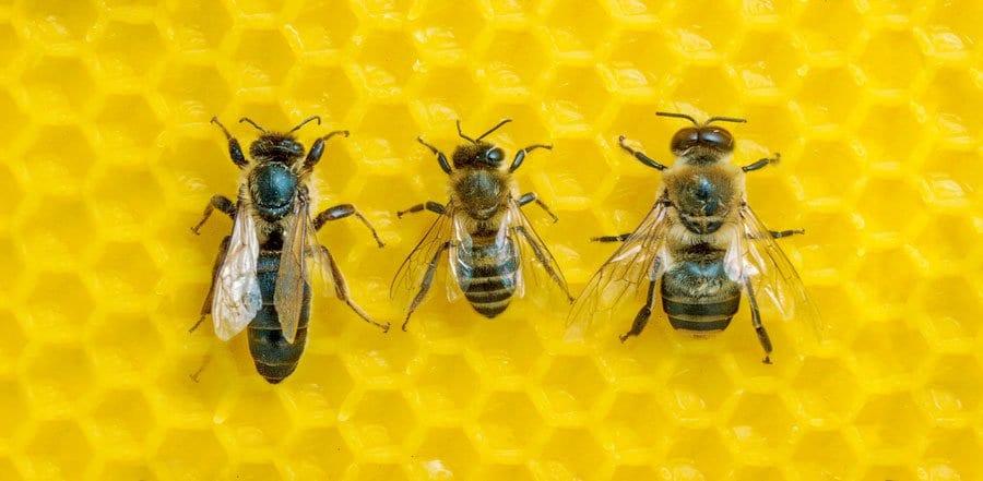 la casta nelle api