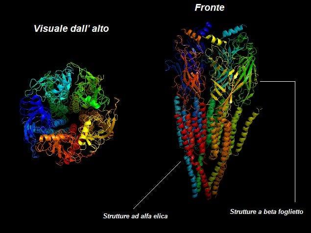 proteine recettore nicotina