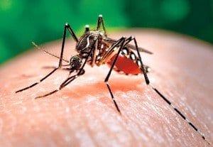 Il Virus Zika