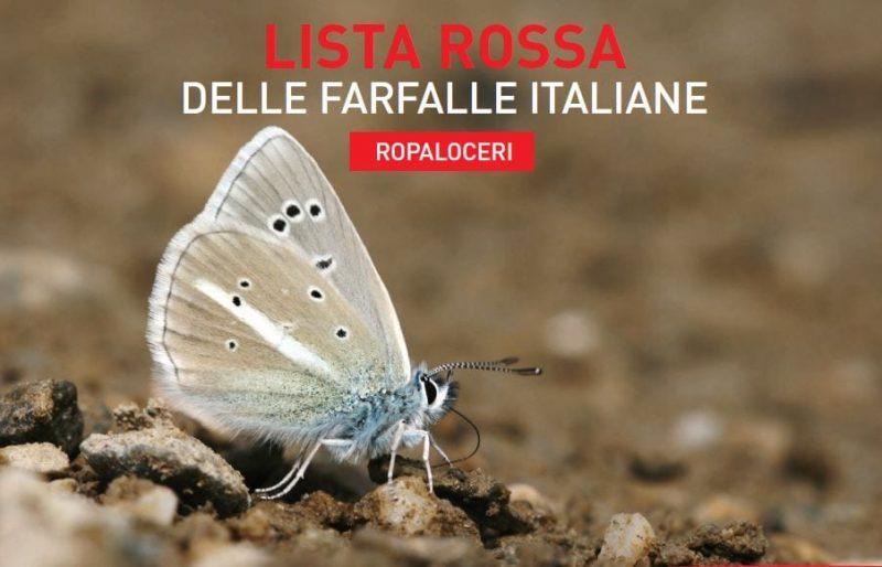 farfalle italiane