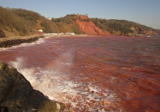 maree rosse