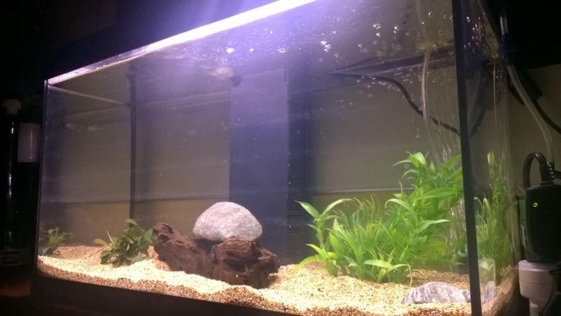 filtro per acquario