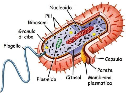procarioti