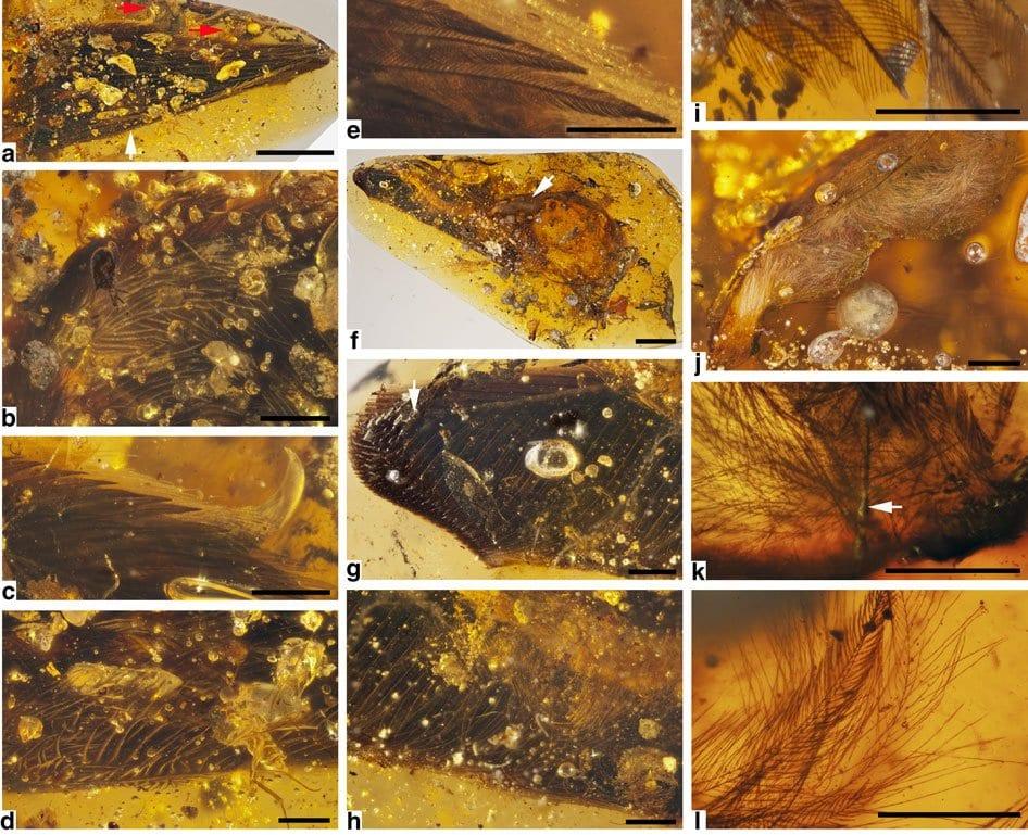 Dinosauri conservati nell' ambra
