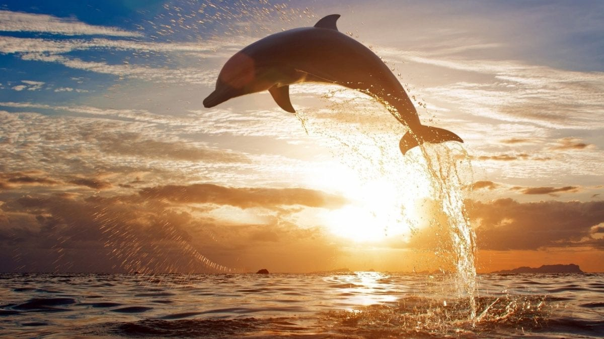 linguaggio dei delfini