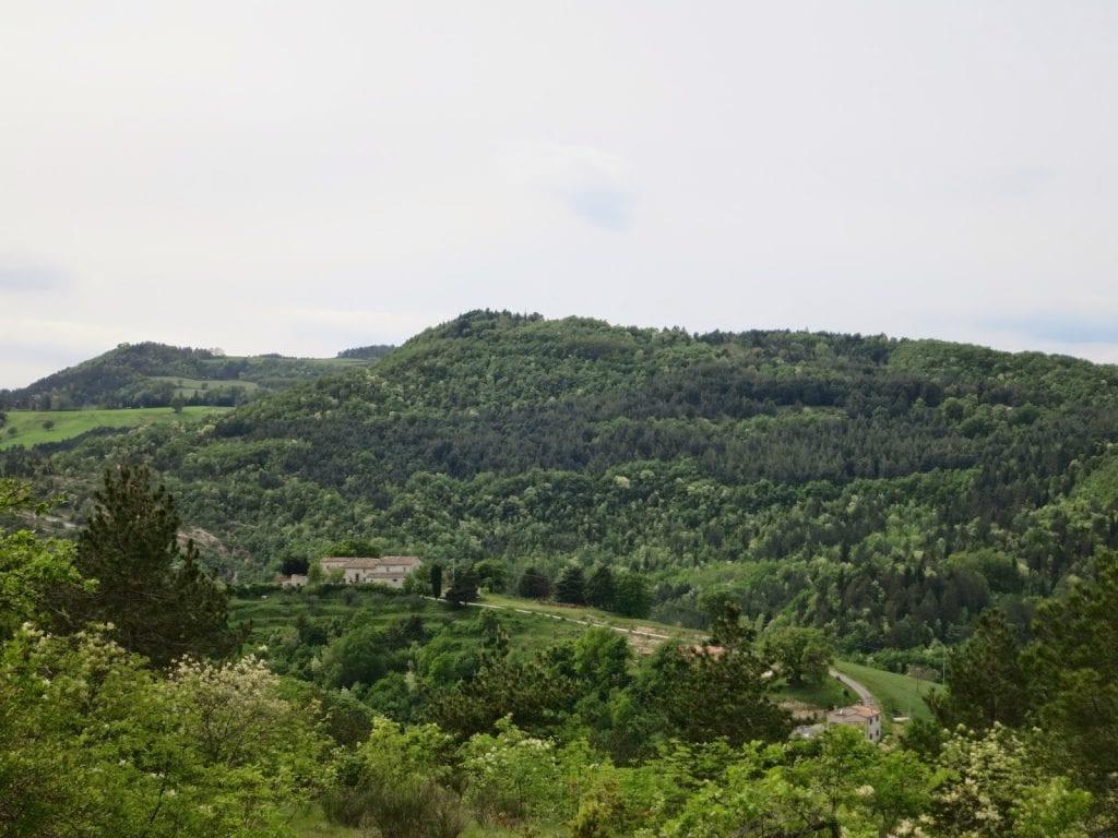 Rimboschimento di pino nero, evidente nel bosco di latifoglie (Monti delle Cesane, foto di Matteo Barbaresi, ItinerisMei)