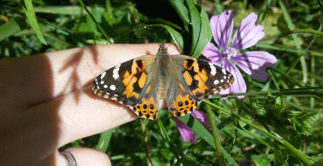 Farfalle: piante, progetti e il ritorno in città