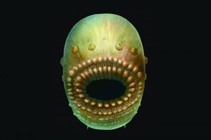 Illustrazione grafica del Saccorhytus.