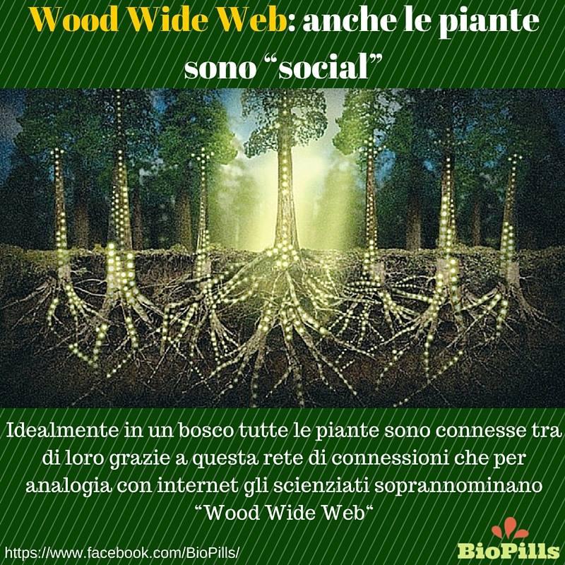 wood wide weeb