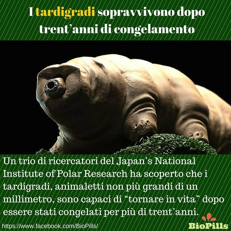 tardigradi sopravvivono al congelamento