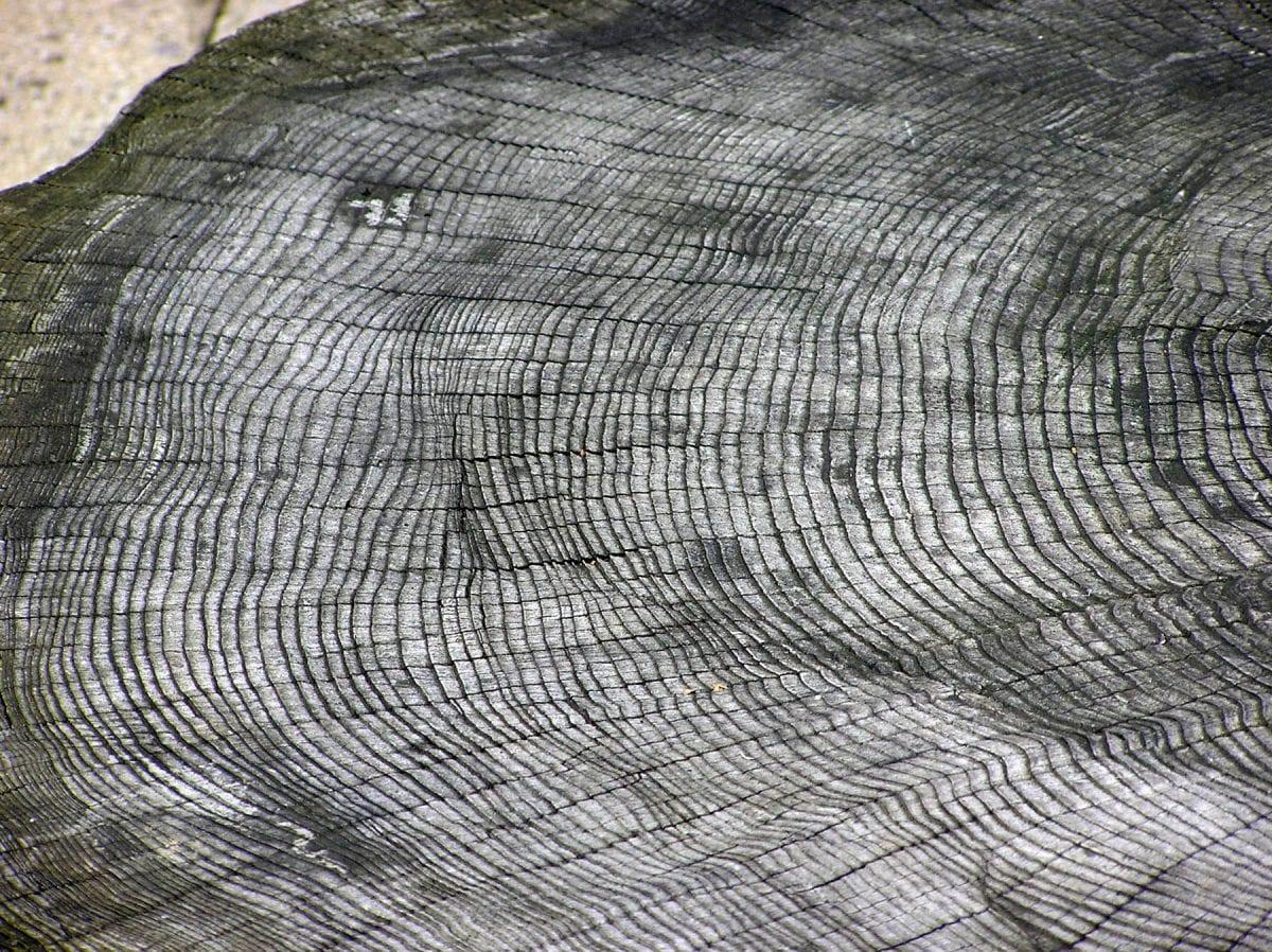 Albero-anello datazione cambiamento climatico