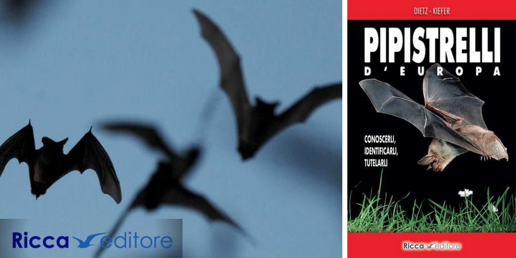Pipistrelli d'Europa, la recensione del libro