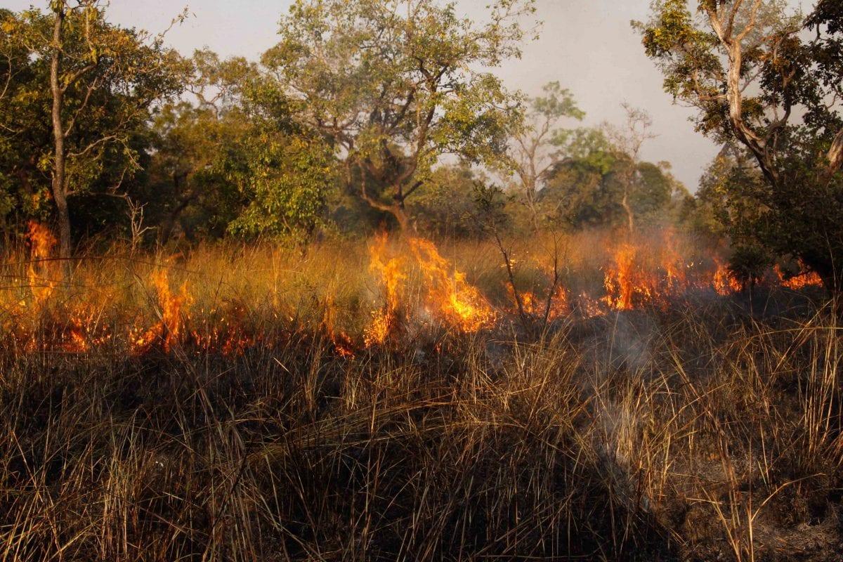 rapaci australiano che cacciano usando il fuoco