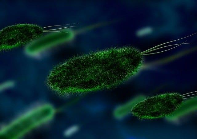 microbi alla riscossa