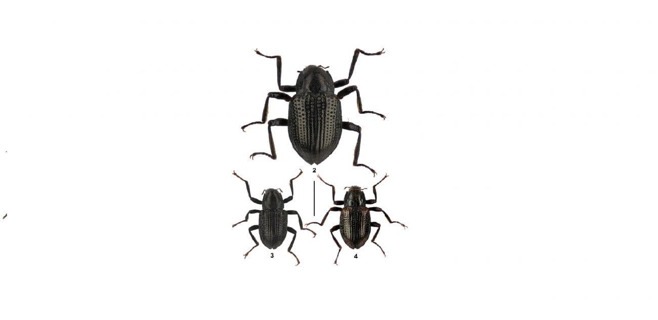 Lo scarabeo Leonardo Di Caprio