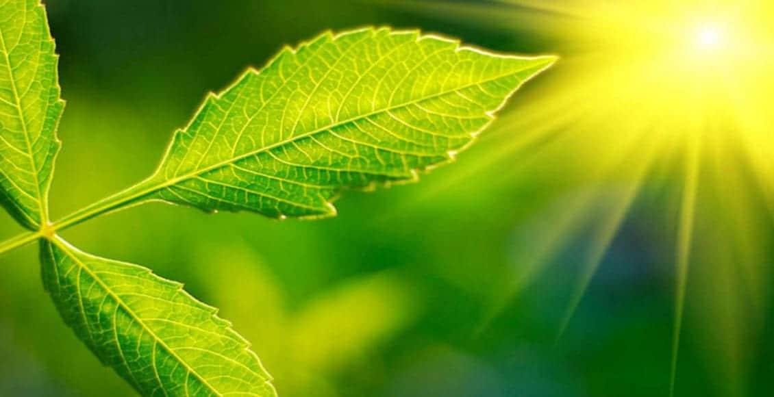 la fase luminosa della fotosintesi
