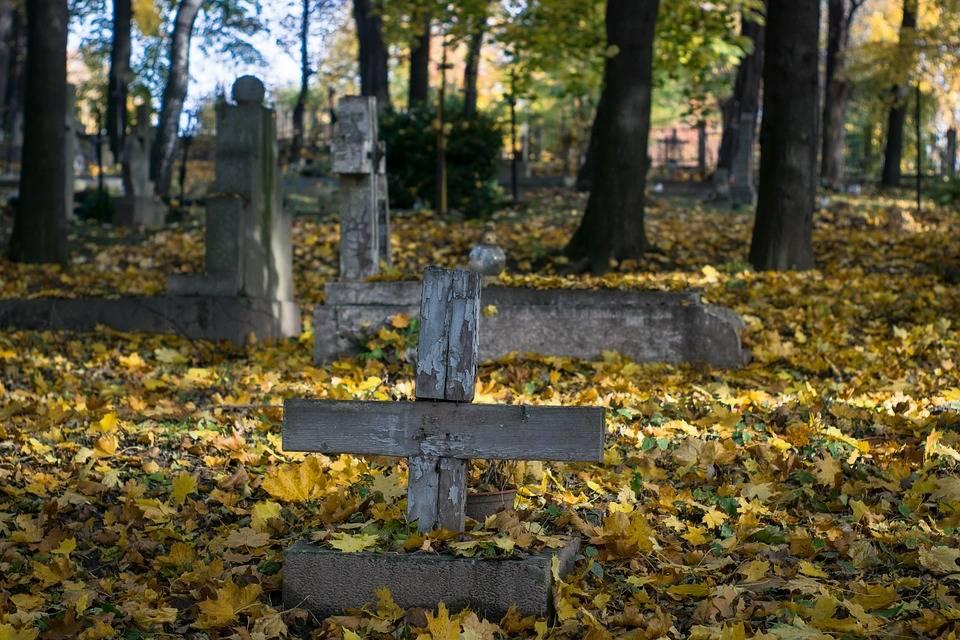 la vita nei cimiteri, quanta biodiversità