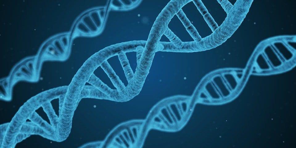 il clonaggio in Biologia Molecolare