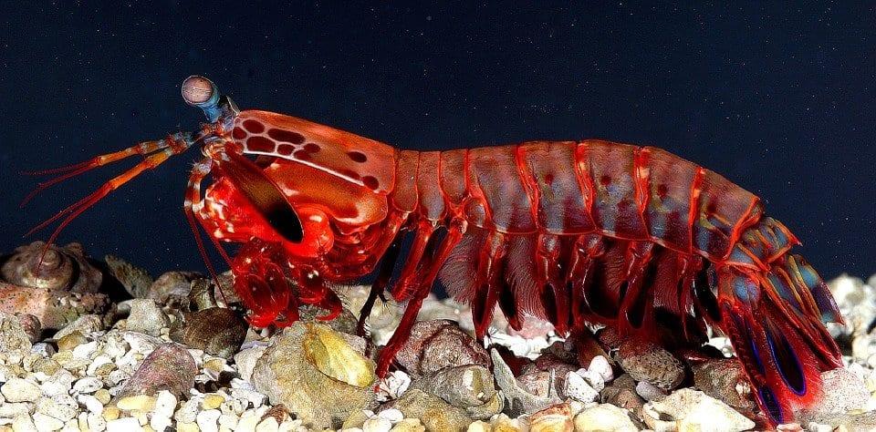 Crostacei: gli insetti del mare