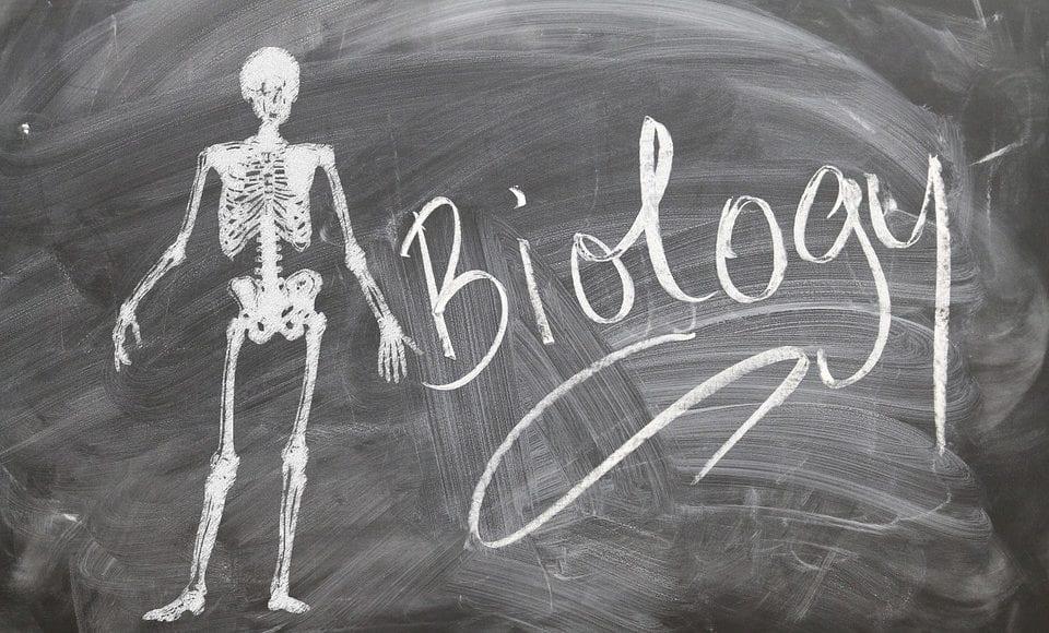 Un Lavoro da Biologo: il Docente