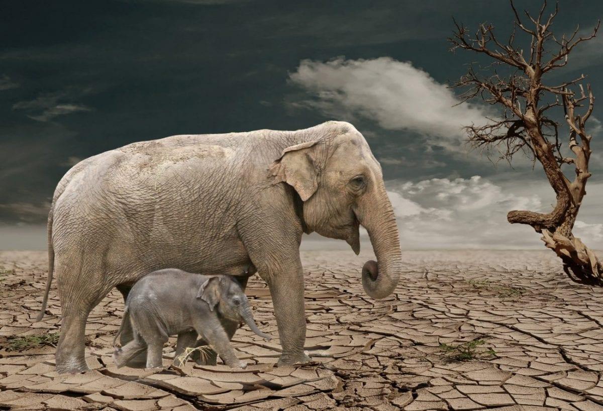 Ingegneria genetica: l'ultima risorsa contro l'estinzione?