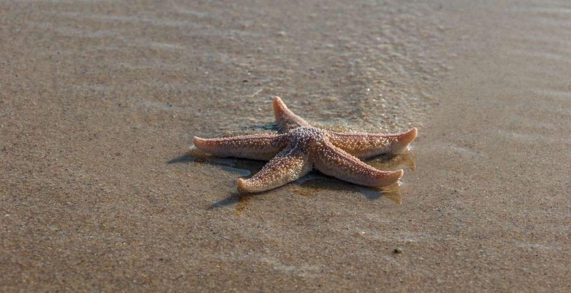 Stelle marine: muoiono fuori dall'acqua?