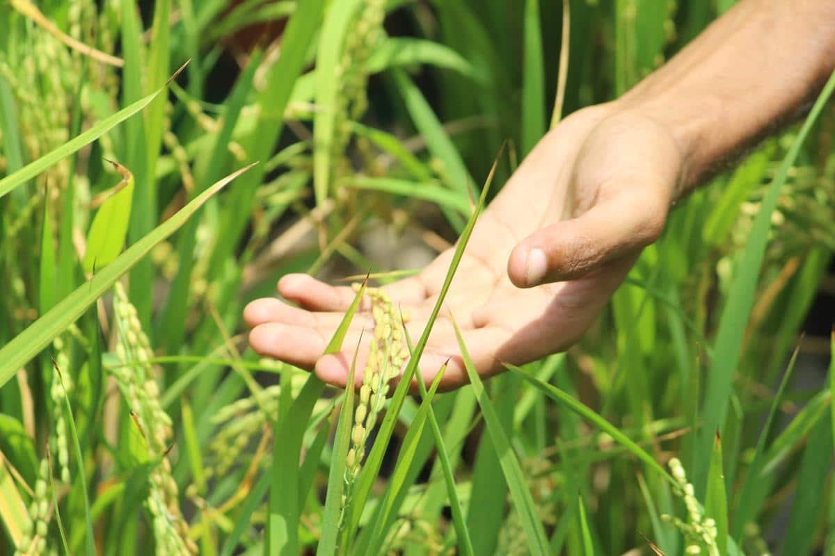 Consulente tecnico commerciale in agricoltura