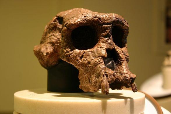 Alle origini dell'evoluzione umana: i primi ominidi