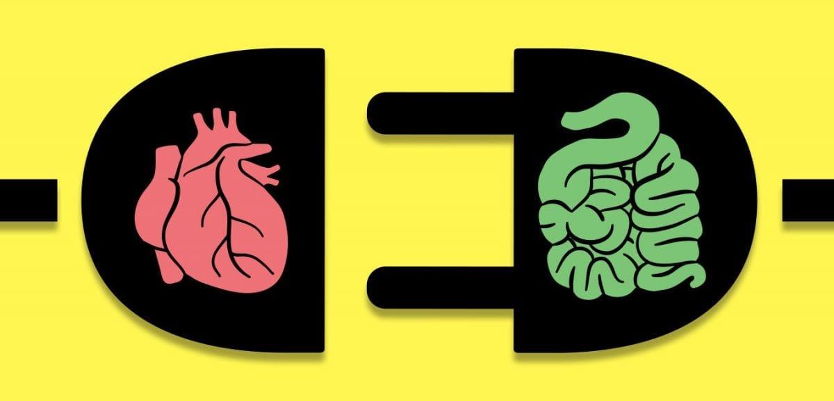 Malattie cardiovascolari e microbioma intestinale