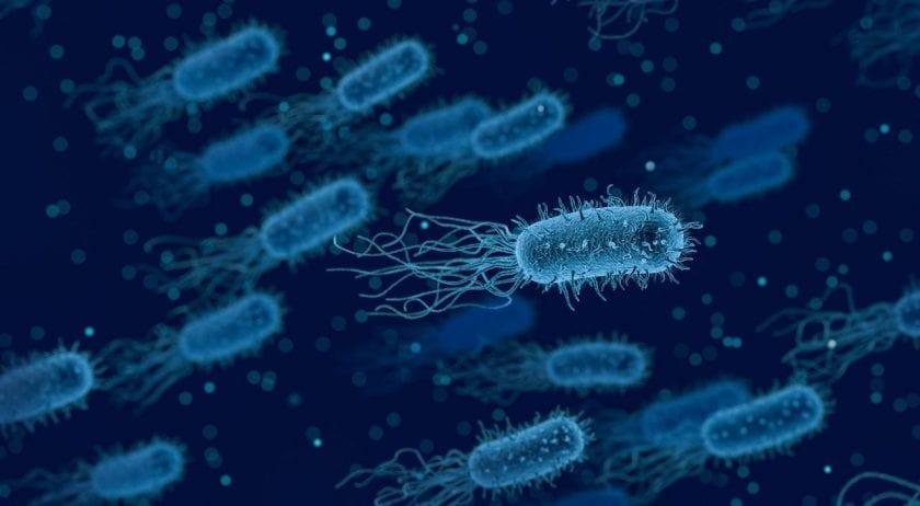 microrganismi batteri patogeni